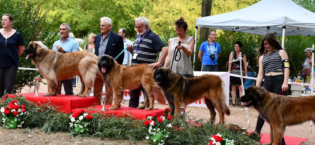 "Carnival Bear from Castle ""Louna"" - 3rd Place"