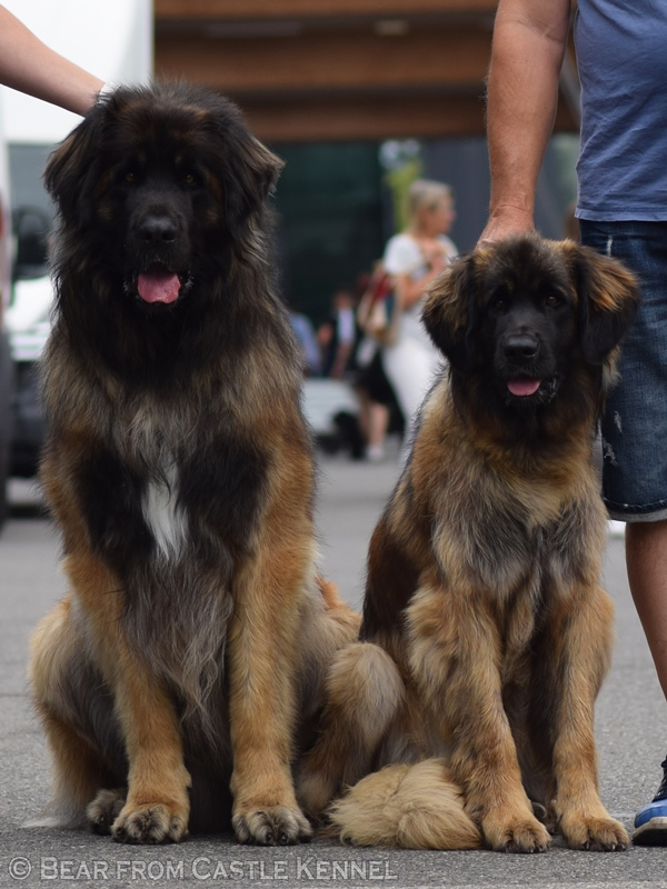 Giorgio & Gaia