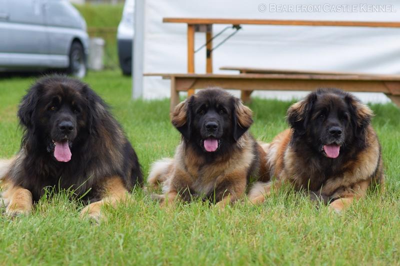 Giorgio, Gaia, Casey